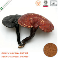 Natural Reishi Extract Powder Reishi Polysaccharides