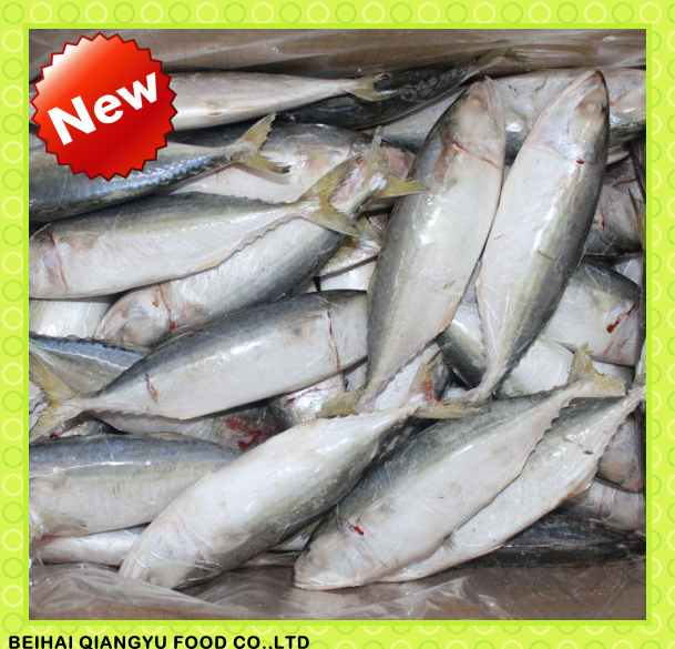 frozen indian mackerel for sale, Supply from China