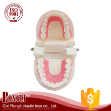 best price plastic dental model of teeth