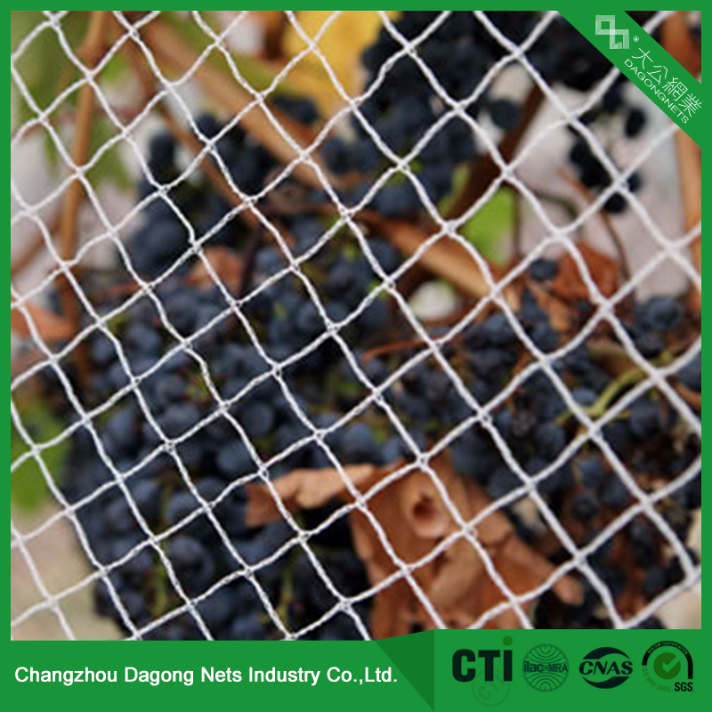China manufacturer attractive design customized knotless anti bird net