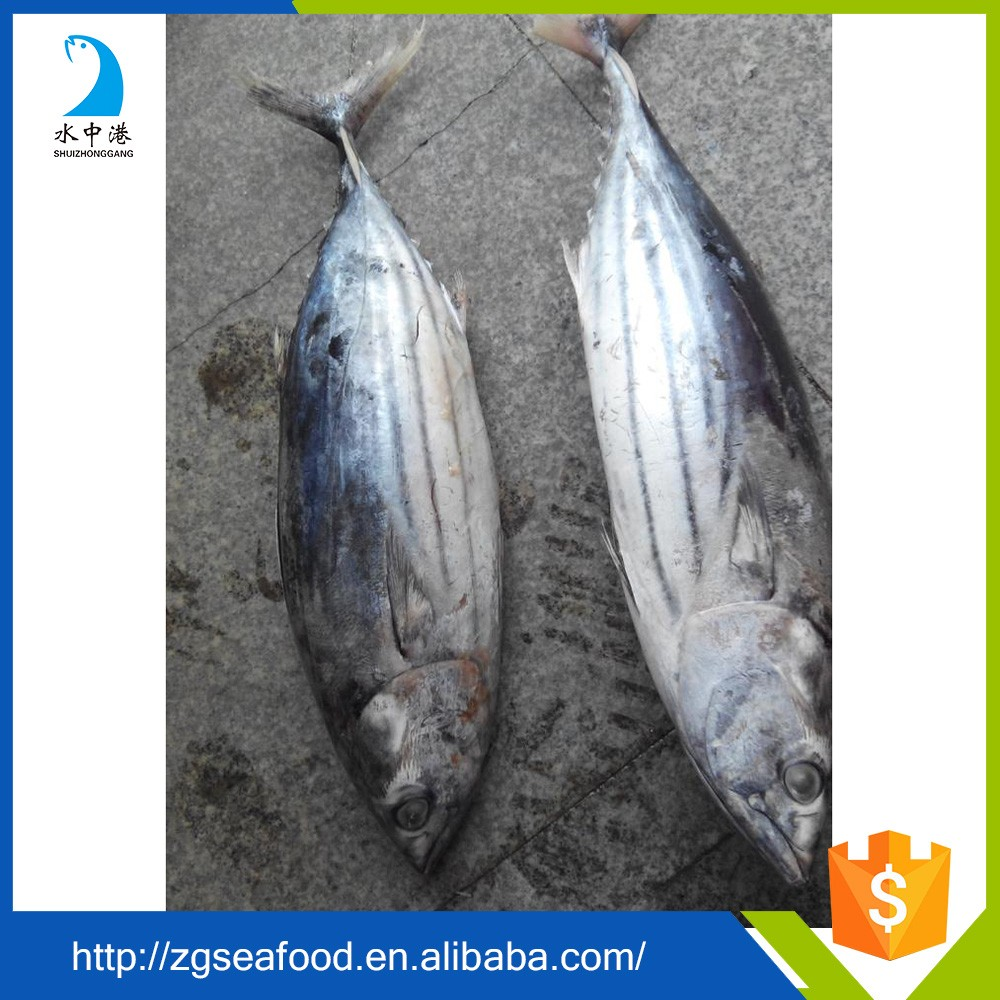 Delicious frozen tuna fish price