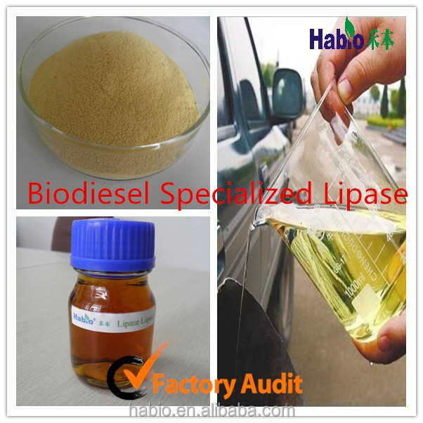 Hot Sell!!! Lipase Enzyme Biodiesel