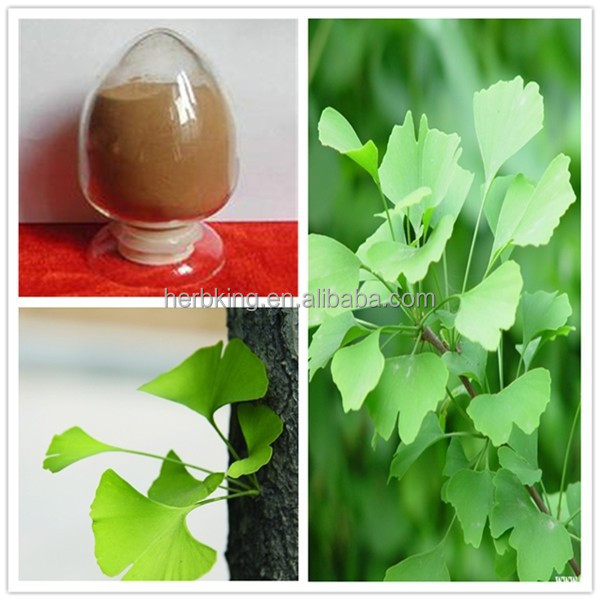 Manufacturer Supply 100% pure Natural Ginkgo biloba extract 24% Flavones 6% lactones