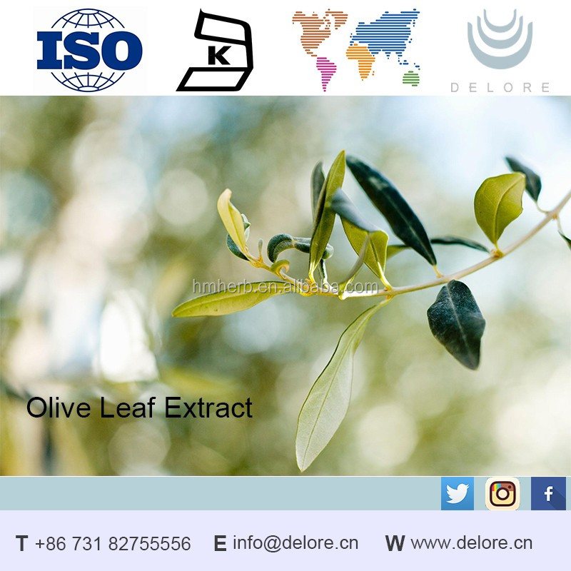 GMP 100% Natural olive leaf extract 20% Oleuropein