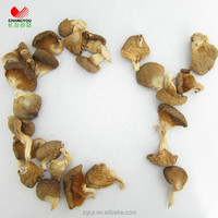 Dried Pleurotus Ostreatus Oyster Mushroom Cultivation