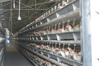 Professional commercial chicken house/metal chicken nesting boxes/automatic feeder for chicken