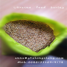 long-term offer bulk grain of barley with best quality and competitive price