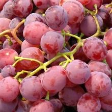 Superhot Wholesale Red Globe Table Grape