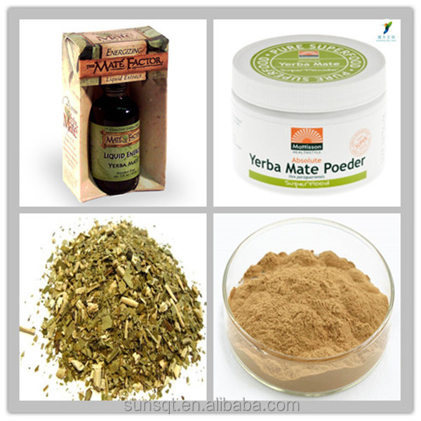 Natural Paraguay tea extract / Yerba Mate Extract Powder 8% Caffeine