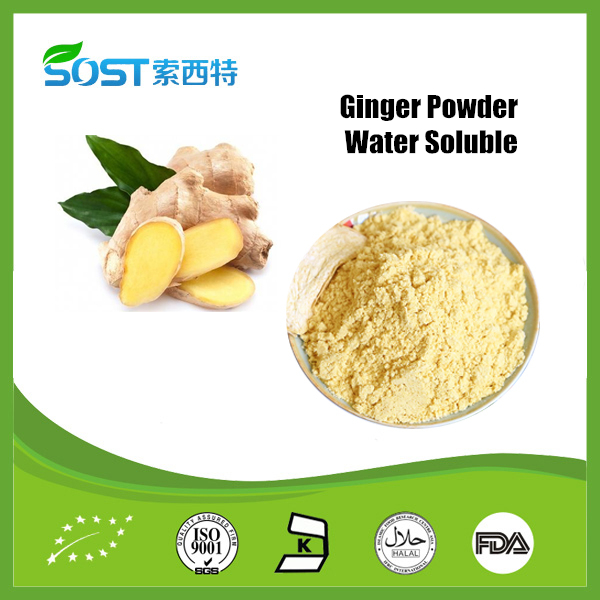 China Supplier 100% Natural Dried Yellow Ginger Powder