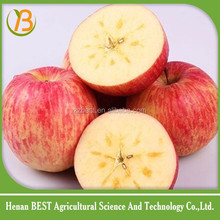 Chinese apple red and bulk fruit price low