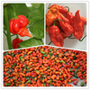 The Bhut jolokia seeds, ghost pepper seeds, ghost chili seeds in bulk