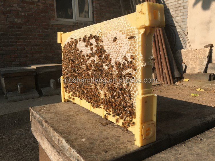 Automatic plastic bee frame 7 pieces for flow honey beehive