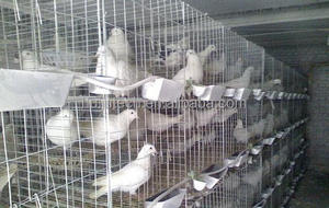 Pass CE pigeon cages design for 32 pigeon house high quality pigeon coops HJ-PC32