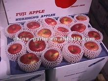 Fresh Apple Fruit Price from China