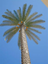 SJH081939 huge Communication tower trees monopole/antenna camouflaged/disguised as 20M artificial date palm trees