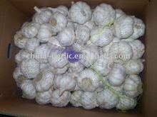 2011 fresh pure white Garlic from Jin Xiang