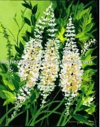 Natural Black Cohosh Extract with hign quality