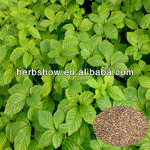 High Quality Gynostemma pentaphylla seeds for planting