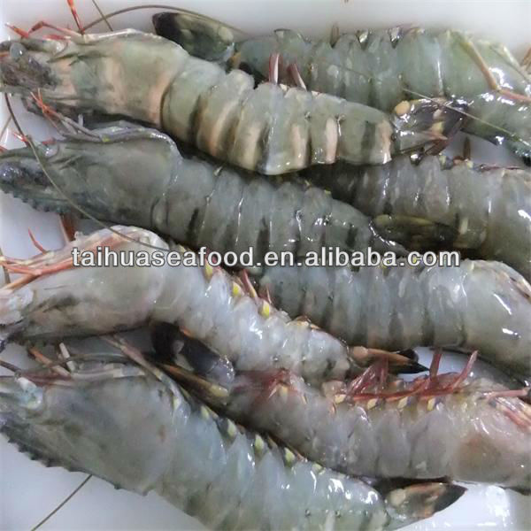 frozen wholesale gulf shrimp