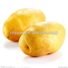 2014 fresh potato,potato