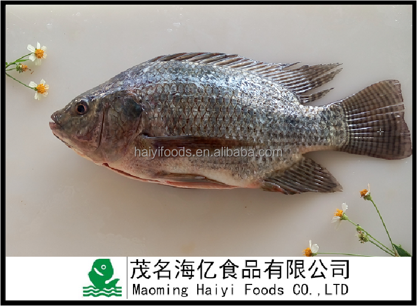 China Factory Supplier IQF Sea Food Frozen Gutted And Scaled Natural Tilapia Fish