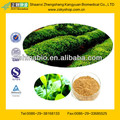 Natural Green Tea Extract from GMP Manufacturer