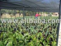 Ornamental & Tropical Plants