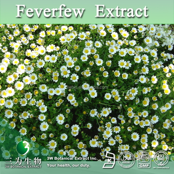 Hot Sales Feverfew Flower Powder,Feverfew Powder Extract