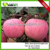 Chinese Fresh Bulk Fuji Apple Fruit From China Factory