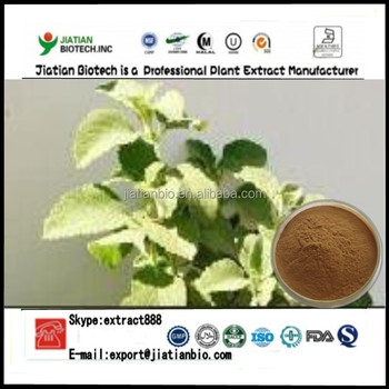 High quality Peumus Boldus extract Powder
