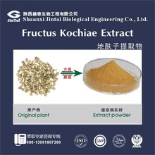 100% natural organic Competitive price Fructus Kochiae