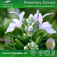 Dried Rosemary Extract Low Price / Rosemary Essential Oil