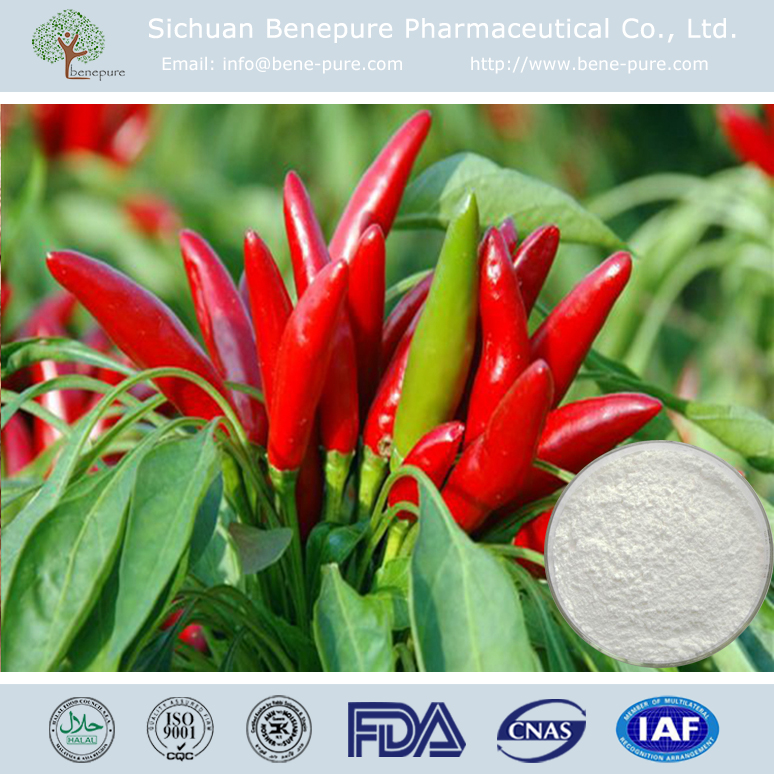 itching and pain reliver Red Chilli Capsicum extract 95% 98%HPLC Capsaicin