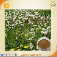 Hot-selling dandelion plant extracts natural herbal medicine new arrival