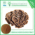 Natural healthy Product Coriolus Versicolor Extract polysaccharides 50%