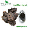 Factory supply 100% natural siberian chaga extract