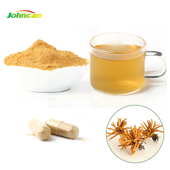 China Wholesale Market cordyceps mushroom extract powder