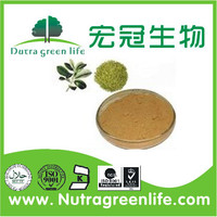 Health food Yerba Mate Extract/Yerba Mate Extract Powder/Ilex paraguariensis leaf powder