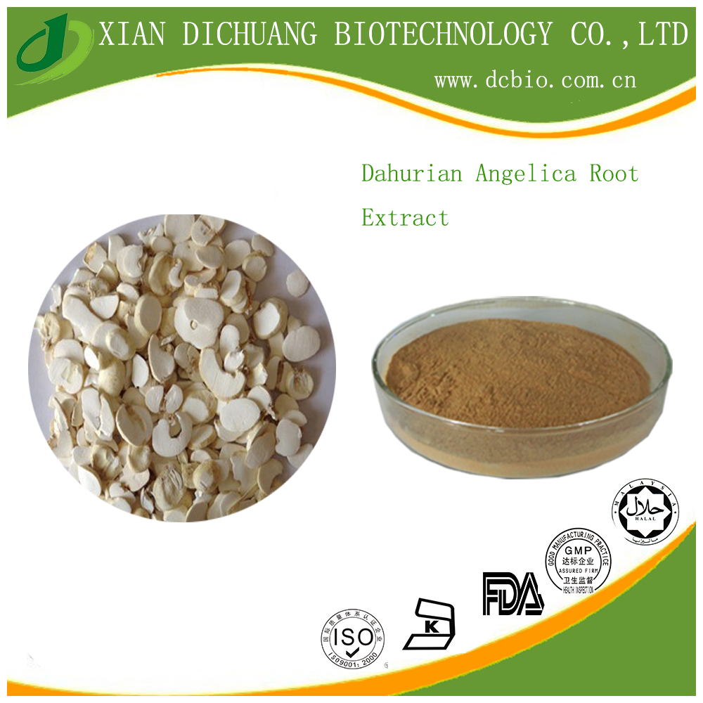 High Quality Dahurian Angelica Root Extract powder 10:1Dahurian Angelica Root P.E