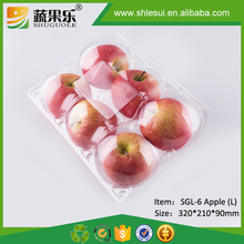 Clear plastic disposable box with hinged lid for 6 apple orange
