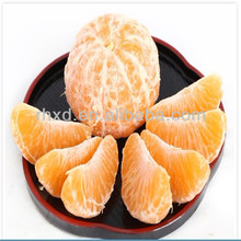 Citrus Fruit fresh mandarin <strong>oranges</strong> from China supplier