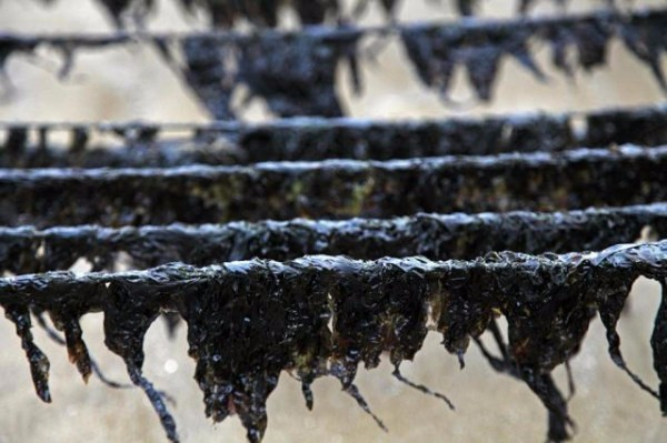 Wholesale Lower Price Dried Seaweed dried Laver.jpeg