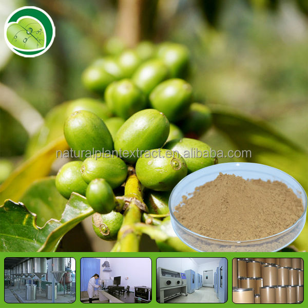 green coffee bean extract/Chlorogenic acids powder/green coffe bean