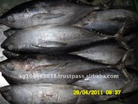 YELLOWFIN TUNA WHOLE ROUND (SEAFROZEN)