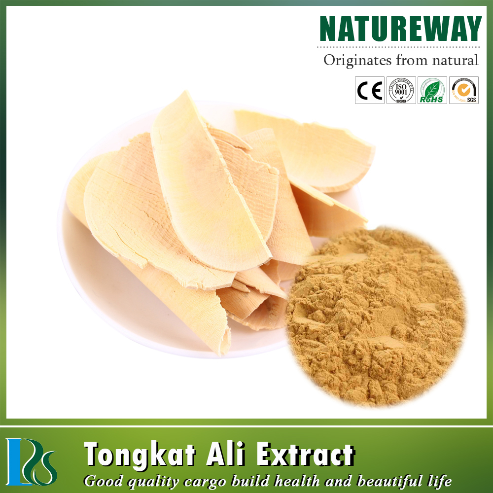 High Quality 100% Natural tongkat ali eurycoma longifolia