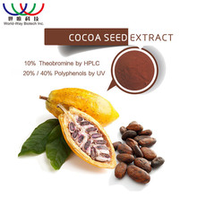 GMP standard medical application theobromine pure cocoa extract