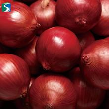 China supplier lowest price wholesale new crop organic delicious nasik fresh red onion