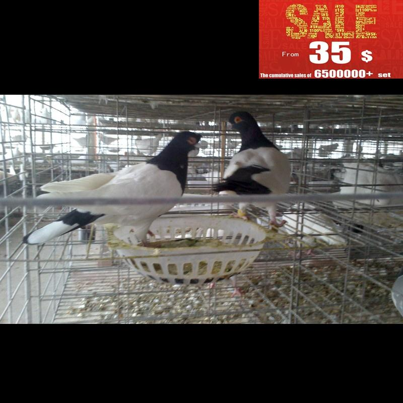 Top Selling Automatic cage bird pigeon for pigeon manufacturers