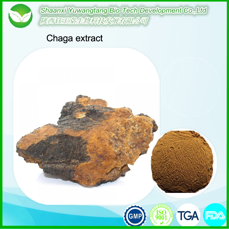 High quality pharmaceutical Chaga extract powder/Chaga Mushroom Extract